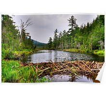 Adirondack Beaver Dam Poster