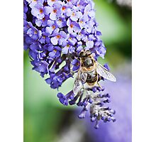 Wasp on Lilac tree Photographic Print