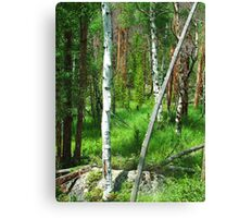 Rocky Mountain National Forest Canvas Print