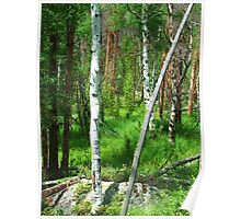 Rocky Mountain National Forest Poster