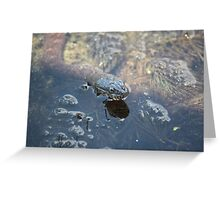 Brown Water Snake Greeting Card