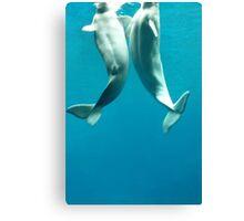 Beluga Whales Canvas Print