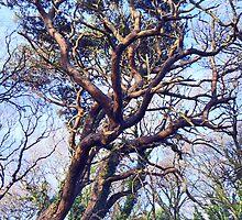 Twisty Tree by sarnia2