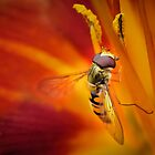 The Golden Wing by Shehan Fernando