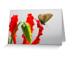 Cycad Blue, Flower Red Greeting Card
