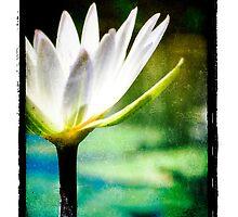 White Lilly - Elegant Beauty by Ramon Vrielink