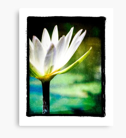 White Lilly - Elegant Beauty Canvas Print