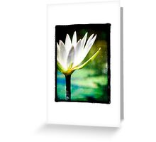 White Lilly - Elegant Beauty Greeting Card