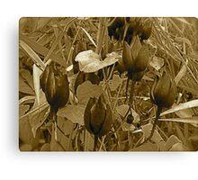 Rose Regeneration! Canvas Print
