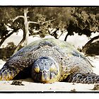 Honu Beach - Windward Oahu Sea Turtle by Ramon Vrielink