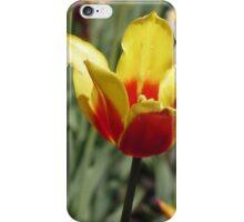 Tulip Festival 3 iPhone Case/Skin