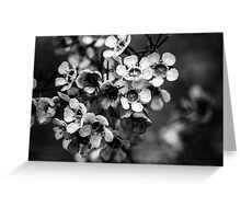 BW flowers Greeting Card