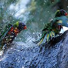 Morning Ablutions #2 by Sandra Chung