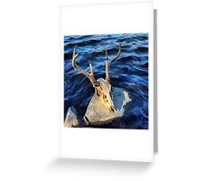 Scull on Rock on River Greeting Card
