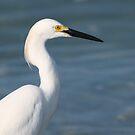 Snowy egret by jozi1