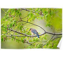 Still near the nest Poster