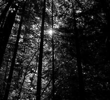 Mossbrae Trees by RobSimpson