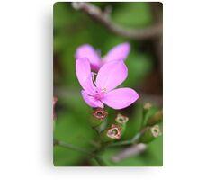 Pink flowers - Nature - Australia Canvas Print