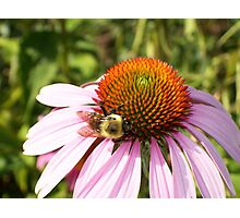 Bumble Bee Love Photographic Print