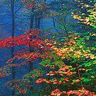 MISTY AUTUMN FOREST by Chuck Wickham