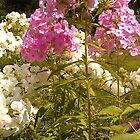 Floral 1 by zamix