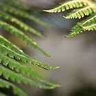 Ferns by ChrisJeffrey