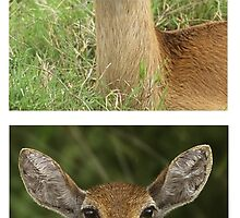 YOU WANT FLIES WITH THAT? (TOP: PHOTO / BOTTOM : ARTWORK) PLEASE READ BLURB by DilettantO