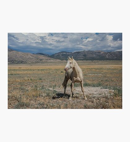 The Poser  Photographic Print