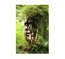 Tree Carving of a Face in the Woods of Stanley Park Art Print