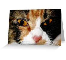 AMINAH BEE FACE, CAT PHOTOGRAPHY Greeting Card