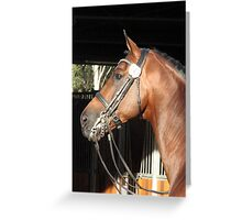 Jive Magic 2008 Dutch warmblood stallion portrait 1 Greeting Card