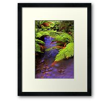 """Ferns~Creek"" Framed Print"