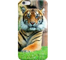Staring Contest… iPhone Case/Skin