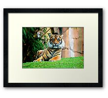 Staring Contest… Framed Print