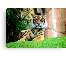 Staring Contest… Canvas Print