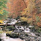 The Birks in Autumn by derekwallace