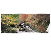 The Birks in Autumn Poster