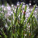 Winter sparkles by David Rozario