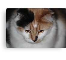 Buffy with Beautiful Eyes Canvas Print