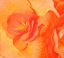 Awesome Begonia by vette