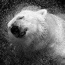 Polar Bear in Central Park Zoo NYC by Sandy Taylor