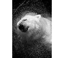 Polar Bear in Central Park Zoo NYC Photographic Print