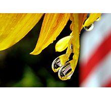 Reflective Patriotism Photographic Print