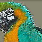 Parrot Colours by Gareth Jones