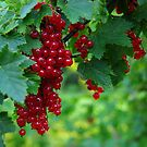 Red currants. II by Bluesrose