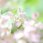 light hydrangea by allisondegeorge