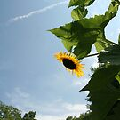 Skyscape with Sunflower by Karen K Smith