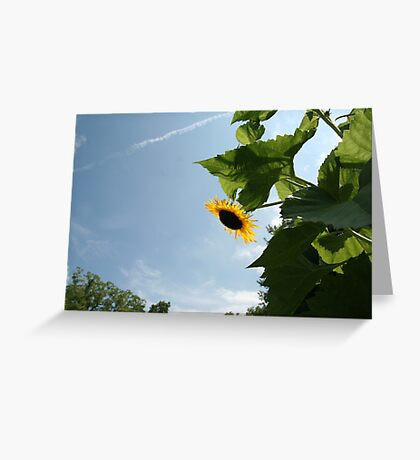 Skyscape with Sunflower Greeting Card