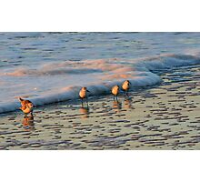Sunrise Sanderlings - Mrytle Beach SC Photographic Print