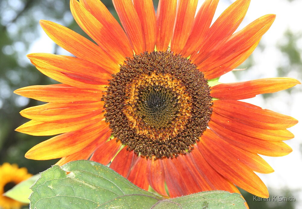 Red Sunflower by Karen K Smith